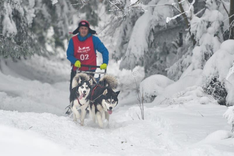Competencia del trineo del perro imagen de archivo libre de regalías