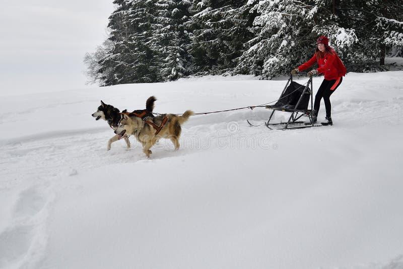 Competencia del trineo del perro foto de archivo