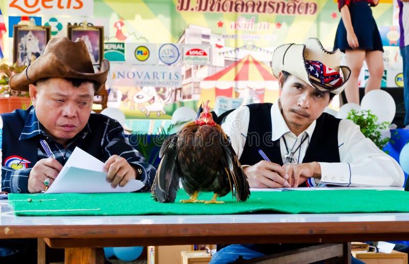 Competição de Serama em Tailândia. imagens de stock