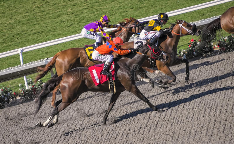 Competição do cavalo de raça