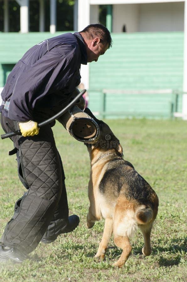 Competição do treinamento do pastor alemão fotografia de stock