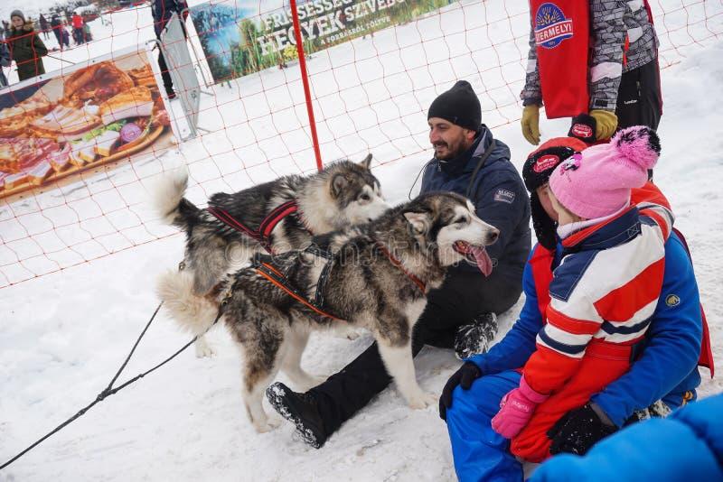 Competição do trenó do cão imagens de stock royalty free