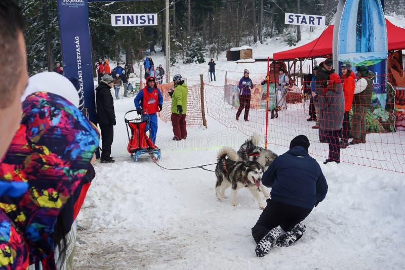 Competição do trenó do cão fotos de stock royalty free