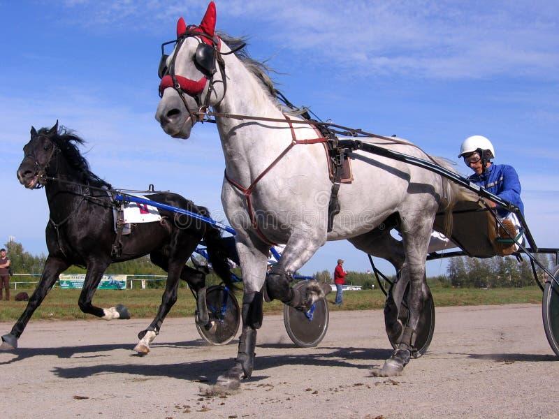 Competities de renbaanpaard en ruiter van Novosibirsk van paarden dravende rassen royalty-vrije stock foto's