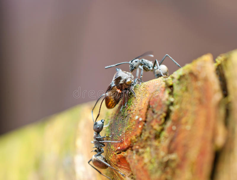 Download Competition stock photo. Image of intimidate, fight, macro - 25809192