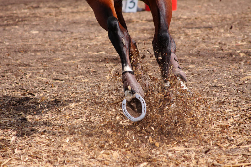 Competitions on concours - the horse skips on a fi