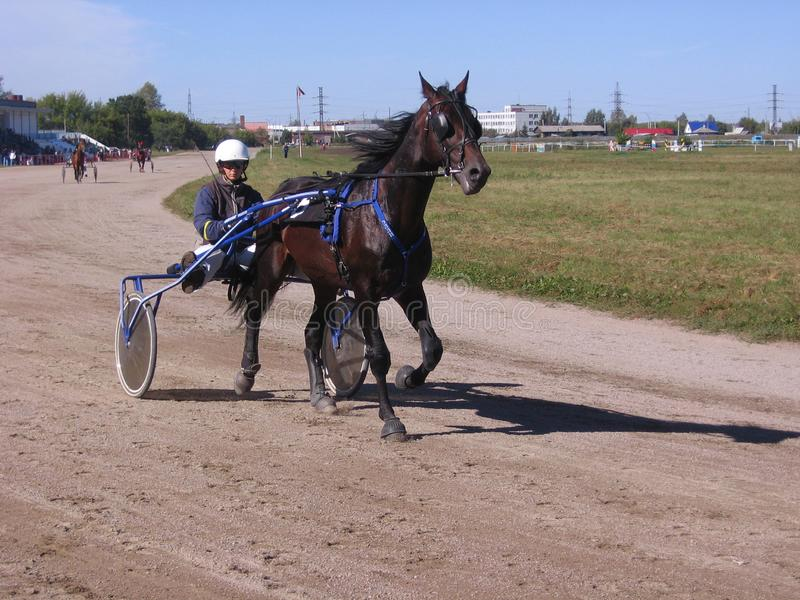 Competitions horses trotting breeds Novosibirsk racetrack horse and rider stock images
