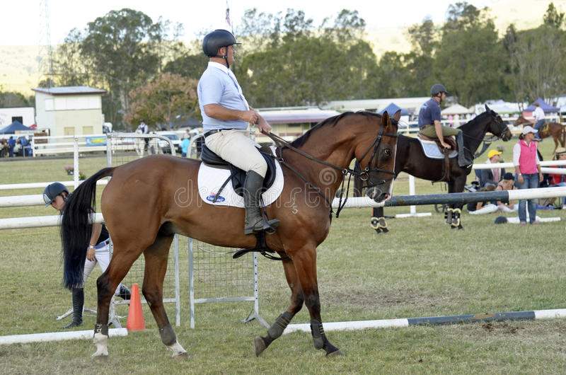 Download Competitive Show Horse And Rider Queensland Country Australia Editorial Stock Photo - Image of annual, fair: 90767953