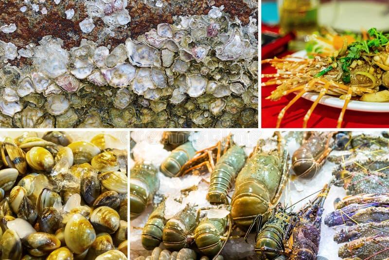 Compilação da imagem do grupo do mar Camarões cinzentos dos mexilhões dos escudos do mar na bandeja de gelo de guloseimas do mar  fotos de stock