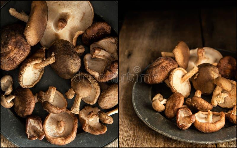 Compilação das imagens de cogumelos de shiitake frescos no natur temperamental imagens de stock