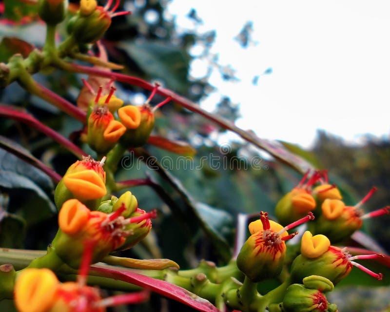 Compilation du macro 46 de fleurs images stock