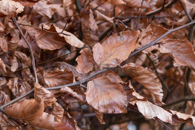 Complètement feuilles de brun photographie stock
