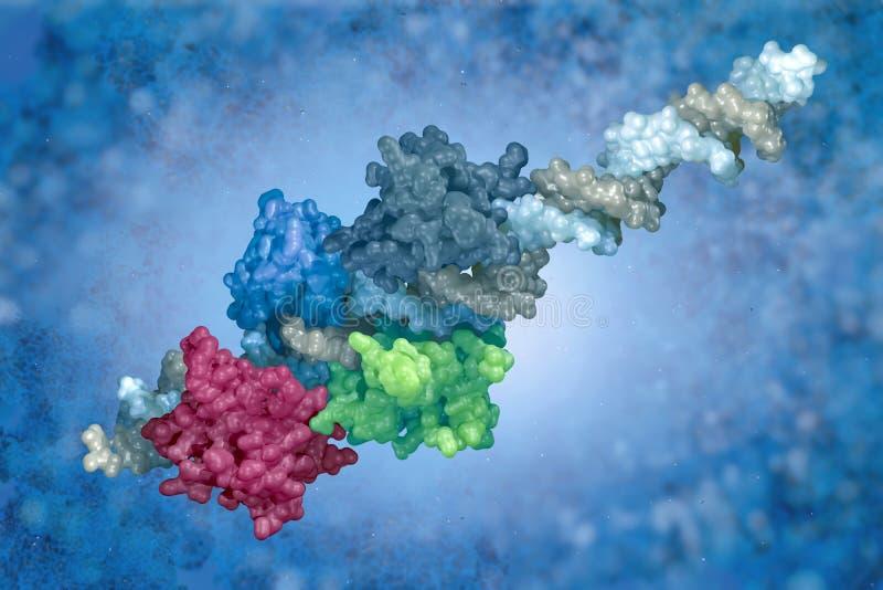 complejo de la DNA-proteína stock de ilustración