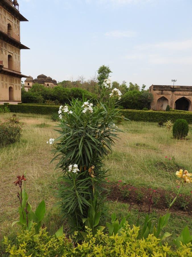 Complejo del templo del palacio en Orcha Madhya Pradesh La India foto de archivo libre de regalías