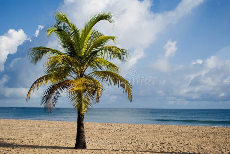 Complejo playero en San Juan (Puerto Rico) imagen de archivo