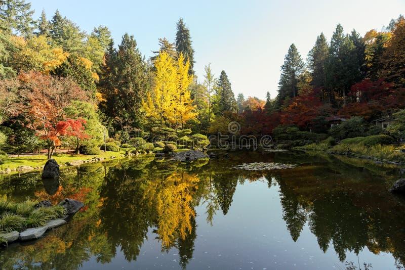 Completamente de cores bonitas da queda no jardim japonês, Seattle Washin imagem de stock