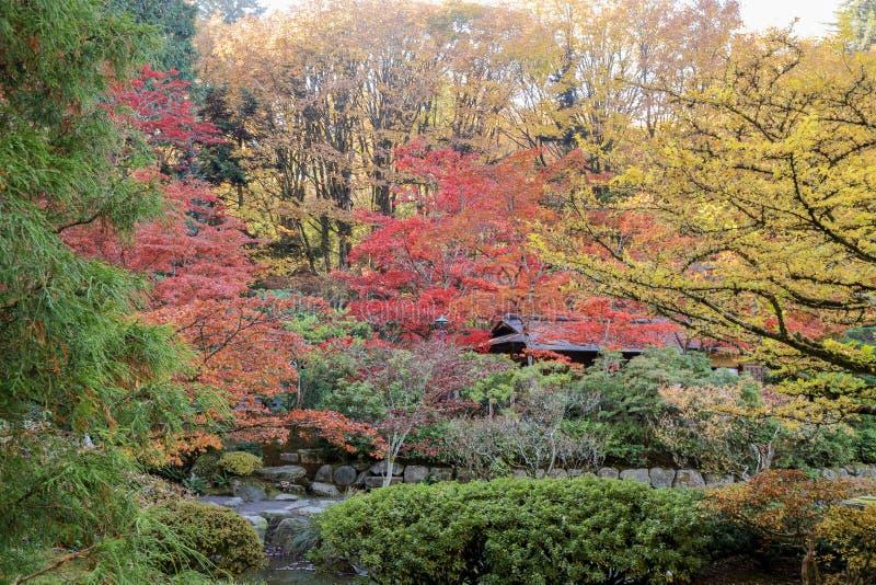 Completamente de cores bonitas da queda no jardim japonês, Seattle Washington foto de stock