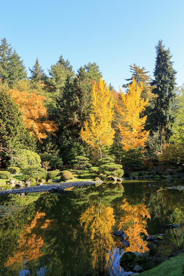 Completamente de cores bonitas da queda no jardim japonês, Seattle Washington imagem de stock