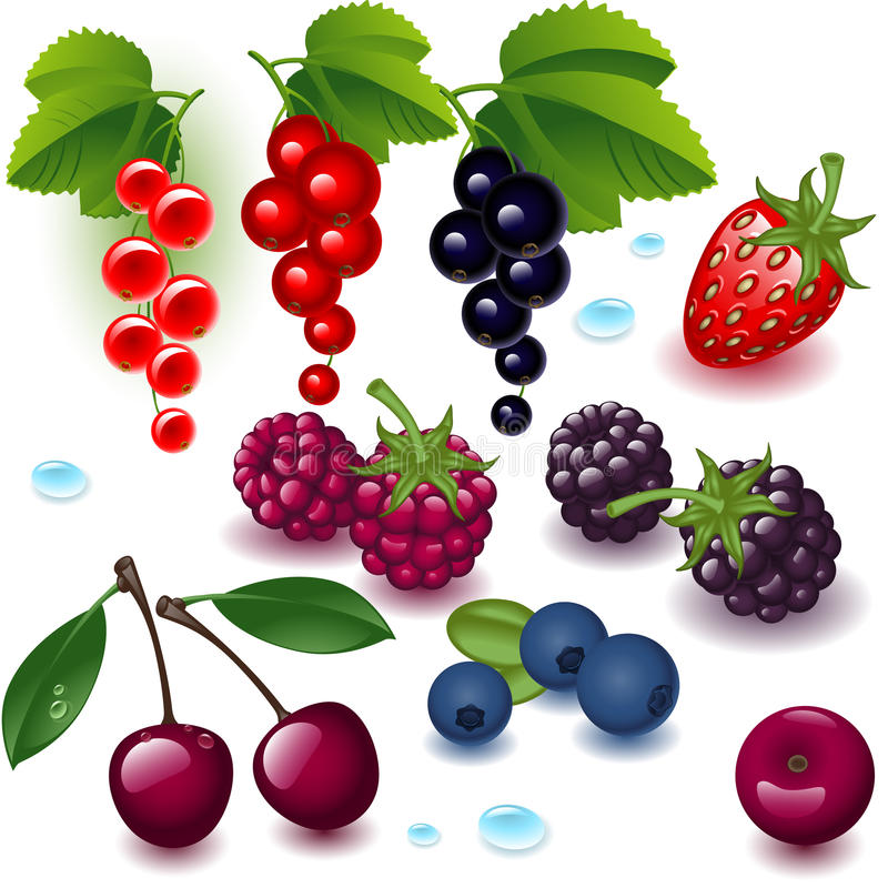 Free Complete Set Berry Stock Photo - 19465700