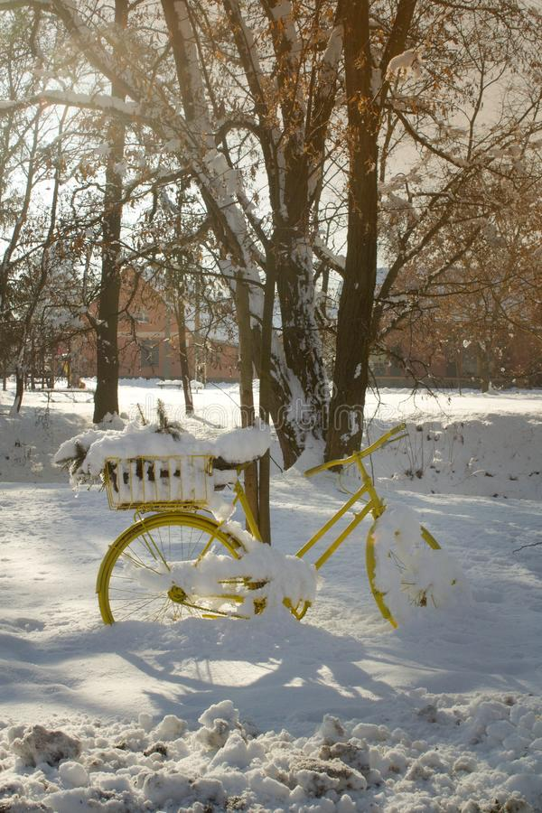 A completely yellow bicycle with a flower in a carrier stands in the snow. royalty free stock image