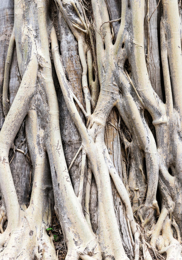 Complex roots stock photos