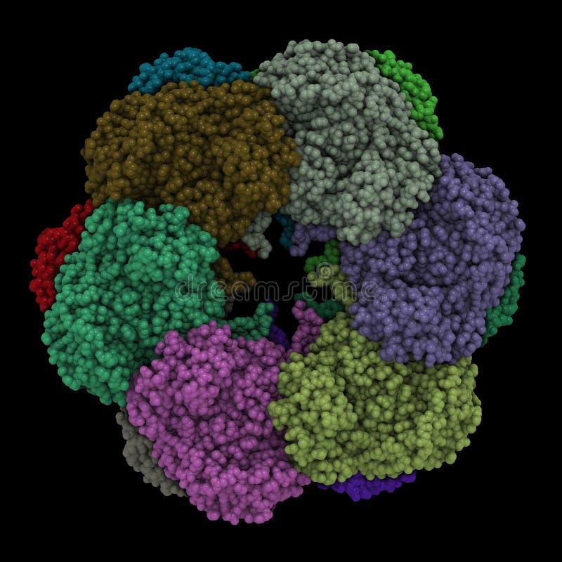 Complexo da proteína ilustração stock