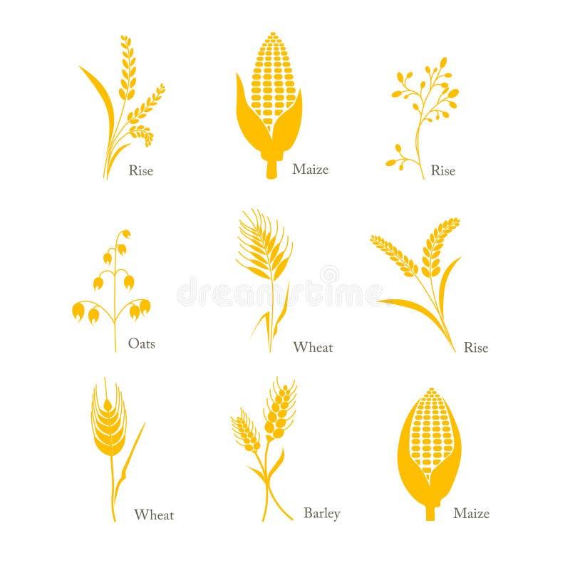 Complexo do milho do arroz do trigo da aveia da cevada da colheita do ícone dos cereais ilustração stock
