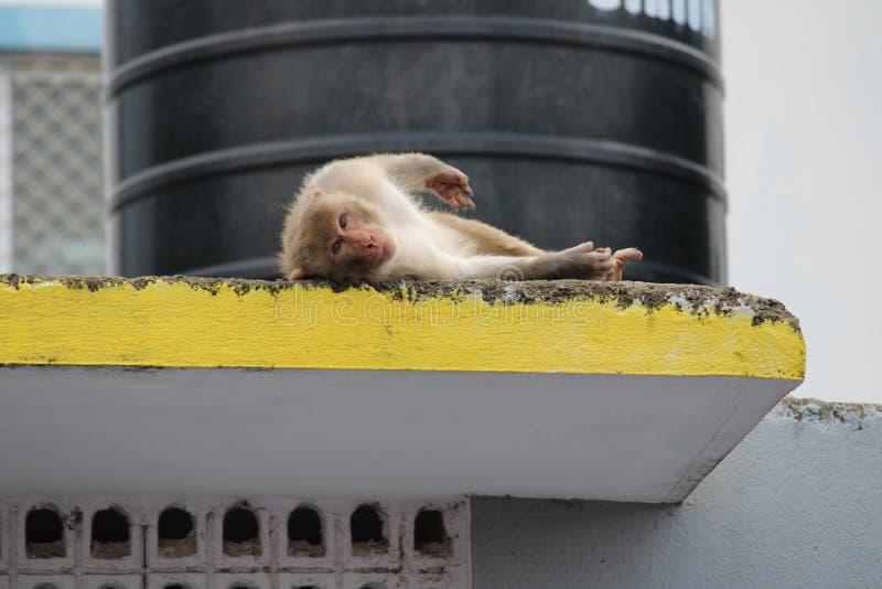 Comportamenti animali intorno noi fotografie stock