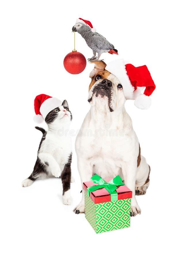 Composé drôle de Noël de Cat Dog et d'oiseau image stock