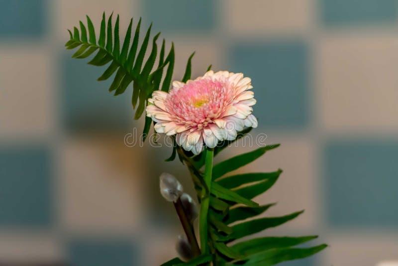 Compos med blomman royaltyfri foto
