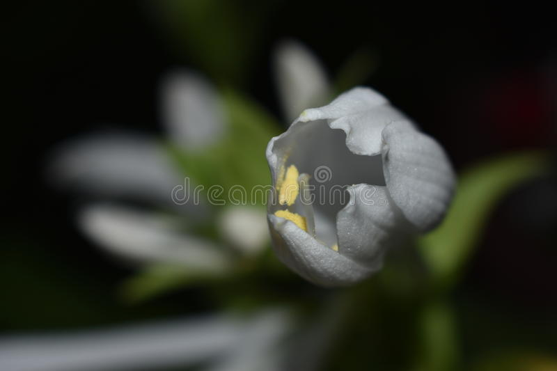 Composed petals. The white flower in my garden made up my petals, waiting for the night to fall stock images