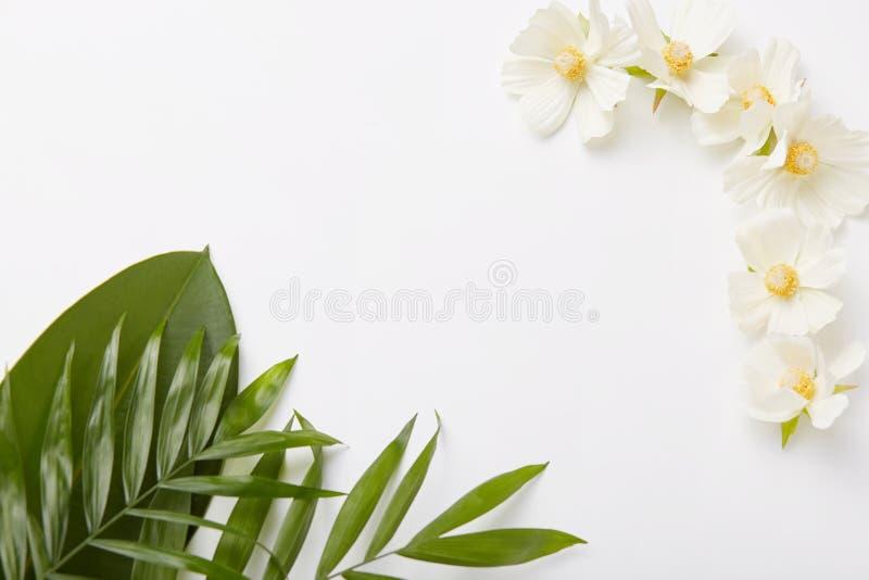 Composição bonita das hortaliças e de flores brancas pequenas no fundo branco com espaço vazio no For Your Information médio foto de stock