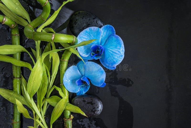 Composição bonita dos termas: flores da orquídea azul e hastes de bambu verdes nas pedras da massagem e no fundo pretos molhados  imagens de stock
