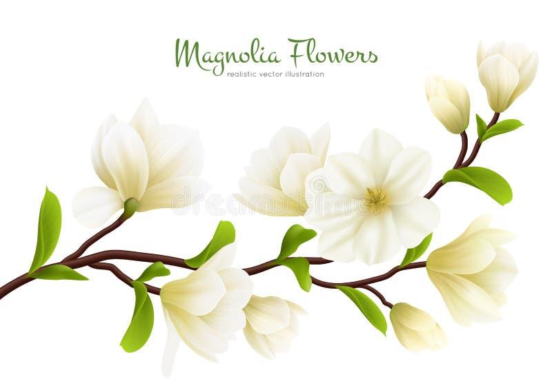 Composição branca realística da flor da magnólia ilustração stock