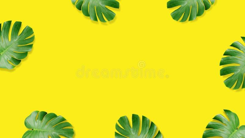 Composição colocada lisa da folha tropical do verão ilustração royalty free