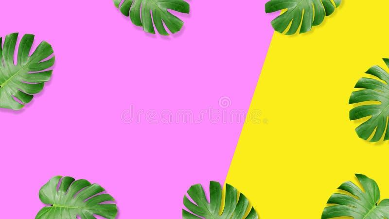 Composição colocada lisa da folha tropical do verão ilustração do vetor