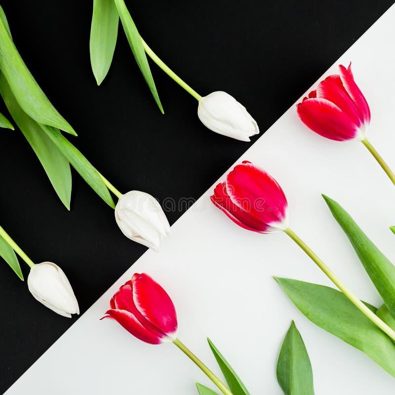 Composição com as flores brancas e vermelhas da tulipa isoladas no fundo preto e branco Configuração lisa, vista superior imagem de stock royalty free