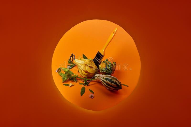 Composição criativa do outono com as abóboras decorativas diferentes fotografia de stock royalty free