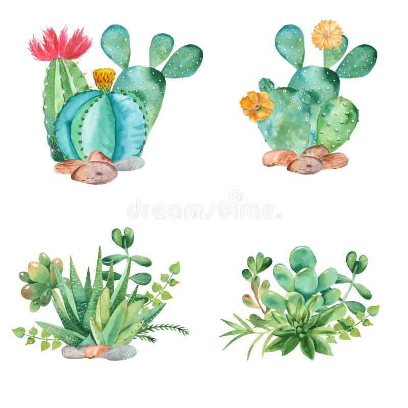 Composição da aquarela com a lata das plantas carnudas, dos cactos e molhar ilustração do vetor