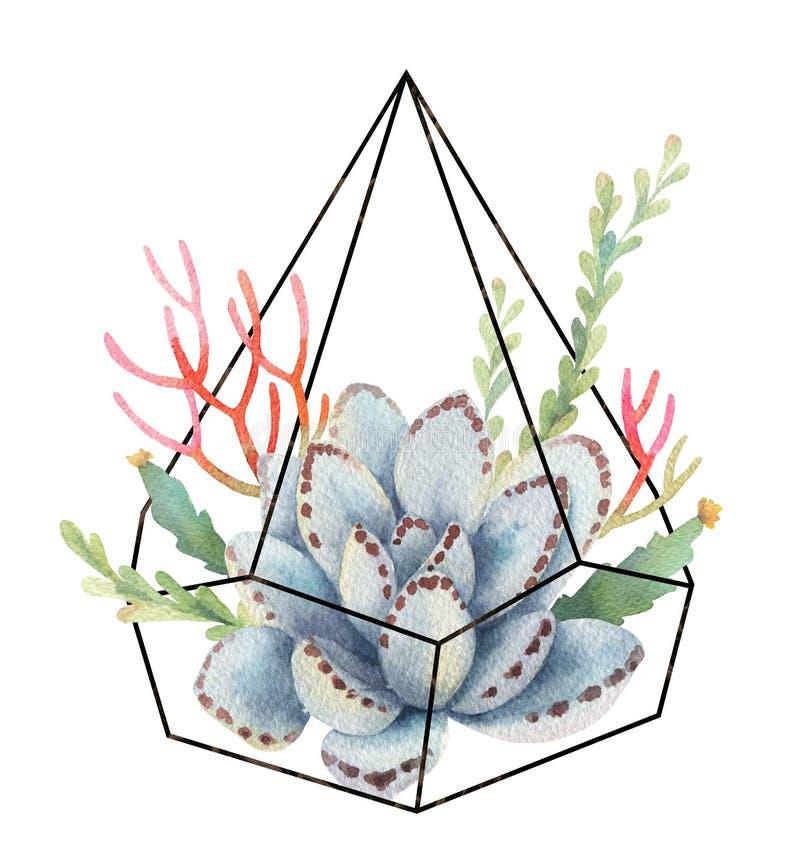 Composição da aquarela dos cactos e das plantas carnudas no florariume geométrico dos terrariums isolado no fundo branco ilustração do vetor