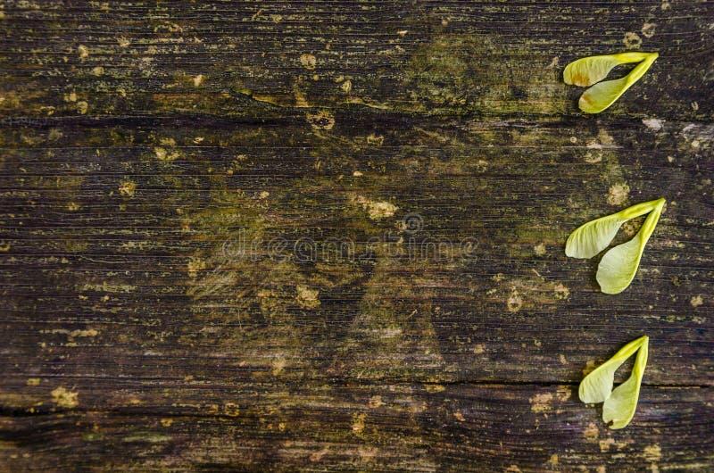 Composição da floresta imagens de stock