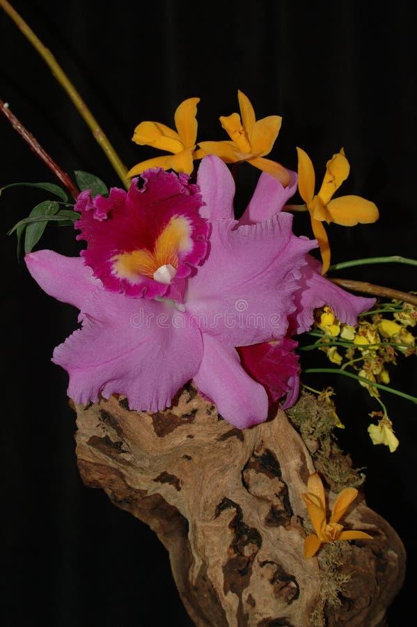 Download Composição da orquídea foto de stock. Imagem de preto, tropical - 105856