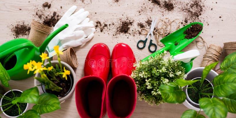 Composição da vista superior de ferramentas de jardinagem e de plantas em pasta na tabela de madeira foto de stock royalty free