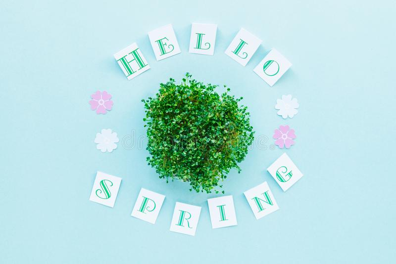 Composição da vista superior olá! da caligrafia da mola e dos brotos frescos do verde decorados com as flores de papel cortadas n fotos de stock