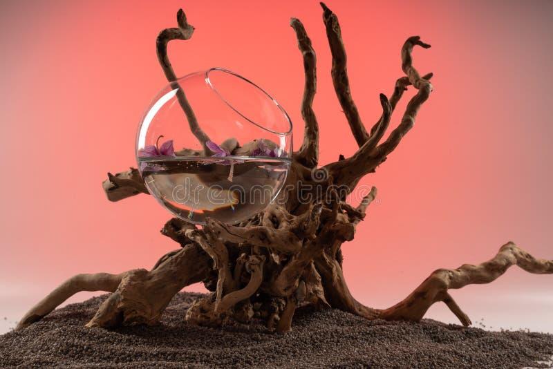 Composição das folhas caídas da orquídea em um vaso com água e uma senão de madeira fotos de stock