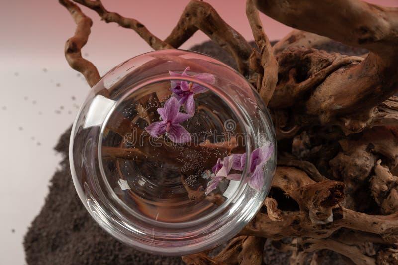 Composição das folhas caídas da orquídea em um vaso com água e uma senão de madeira 4 fotografia de stock
