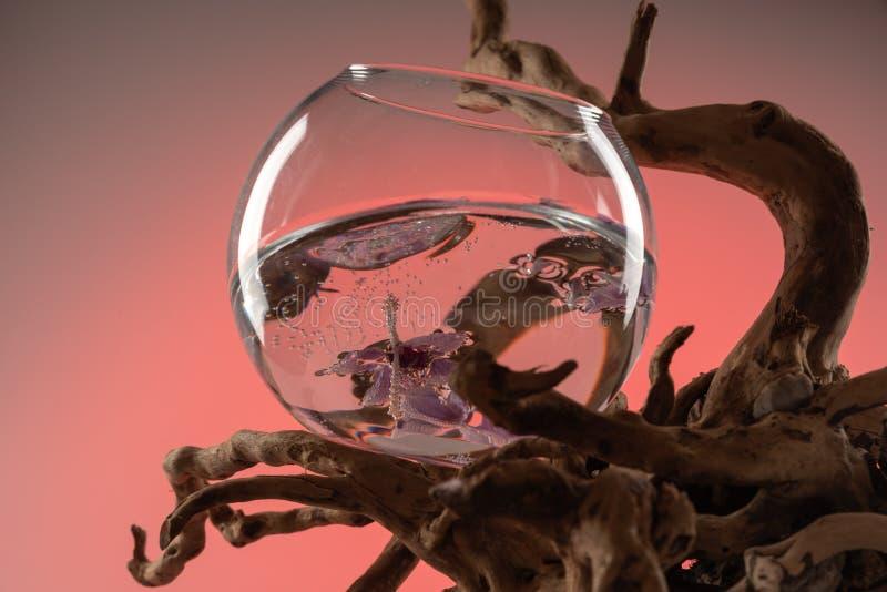 Composição das folhas caídas da orquídea em um vaso com água e uma senão de madeira 5 imagem de stock