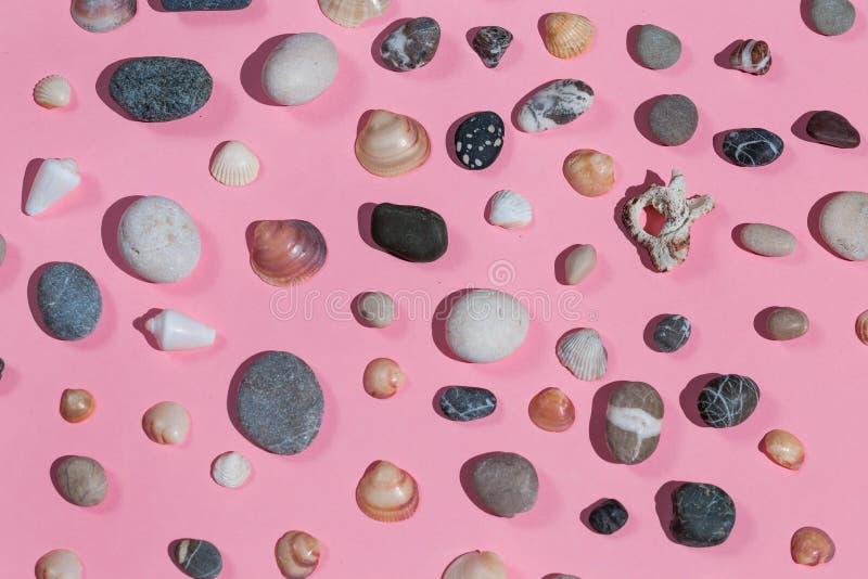 Composição das pedras e das conchas do mar isoladas no fundo cor-de-rosa fotografia de stock royalty free