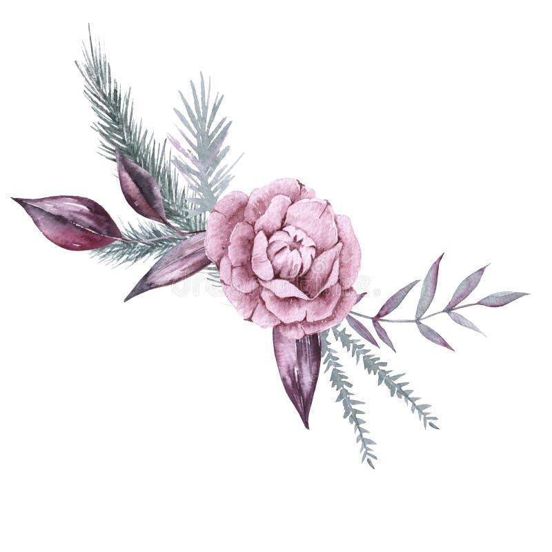 Composição das plantas e das flores Siberian Isolado no fundo branco ilustração royalty free