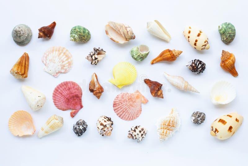 Composição de escudos exóticos do mar no branco fotos de stock royalty free